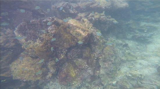 Concha de Perla: Little fishes