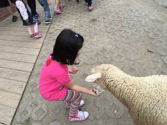 Cingjing Veterans Farm: photo0.jpg
