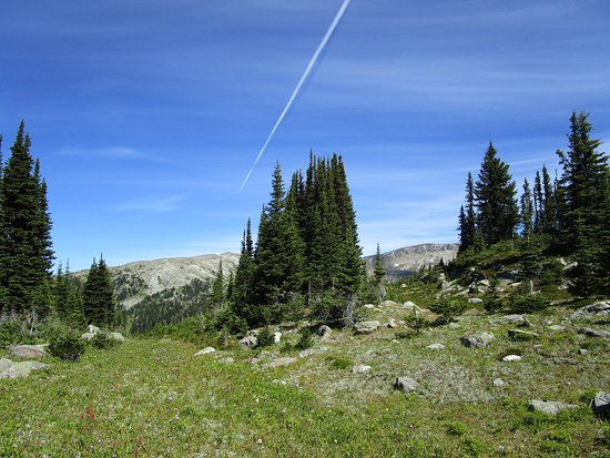 Discover Wells Gray: higher into alpine meadow