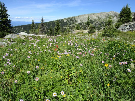 Discover Wells Gray: flowers in the meadow