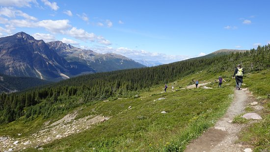 Mt. Edith Cavell: Cavell meadows