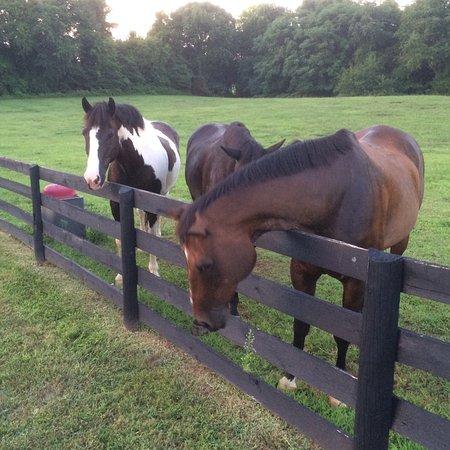 Black Horse Inn : The horses