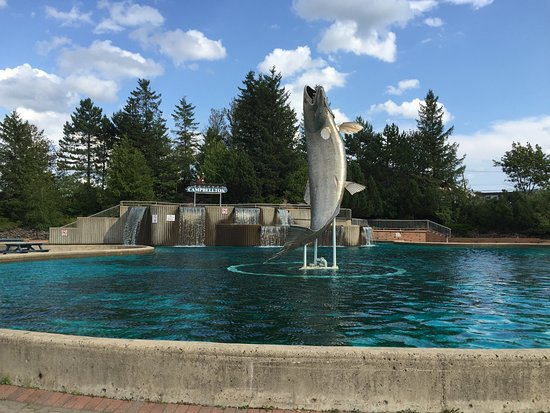 Campbellton, Kanada: The salmon