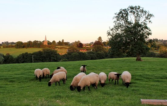 Kimbolton, UK: Sheep in the field over the road.