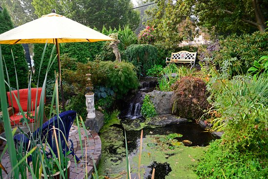 Albion Manor Bed and Breakfast: The pond in the garden