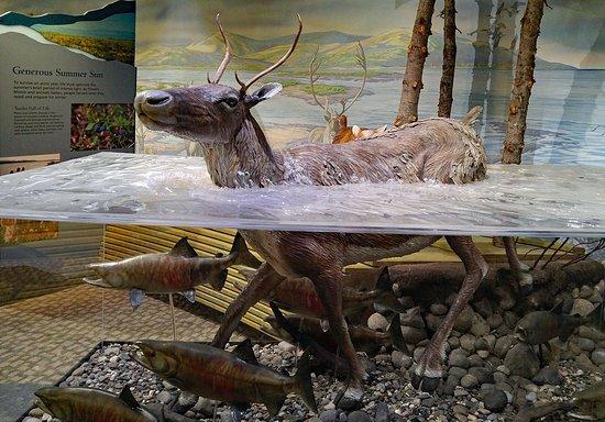 Kotzebue, Аляска: Exhibts in Northwest Arctic Heritage Center