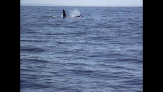 Sidney Whale Watching Picture