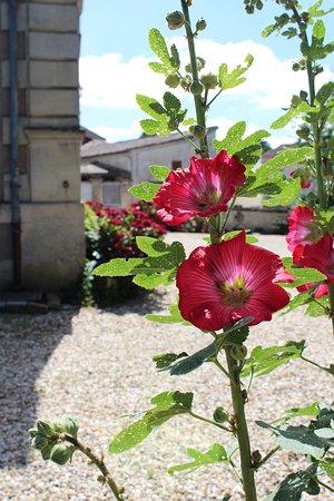 Les roses trémières du jardin - Picture of Chambres d\'Hotes du ...