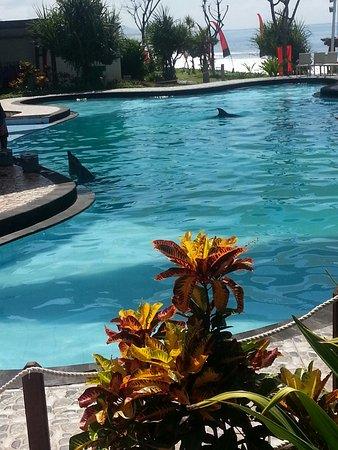 Blahbatuh, Indonésie : Wake Dolphin