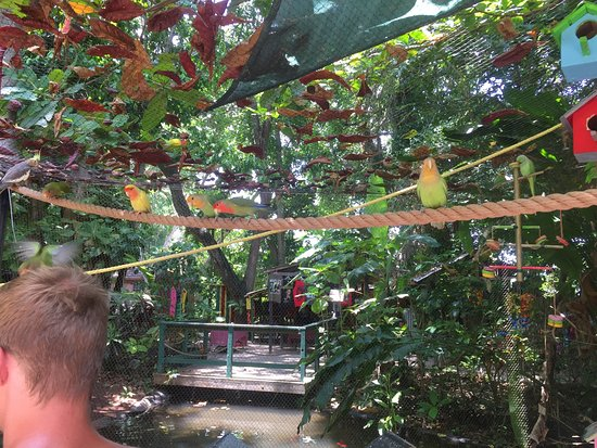 Ocho Rios, Jamaïque : photo2.jpg