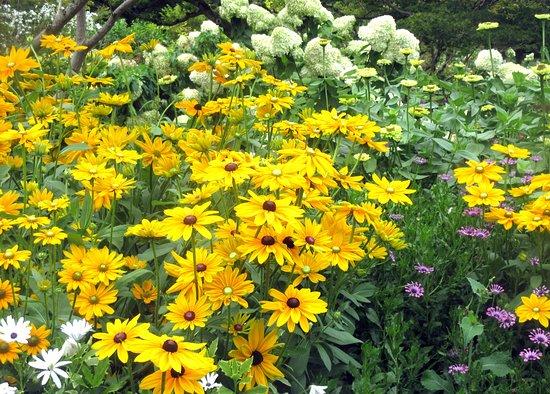 Flowers, VanDusen Botanical Garden, Vancouver, BC