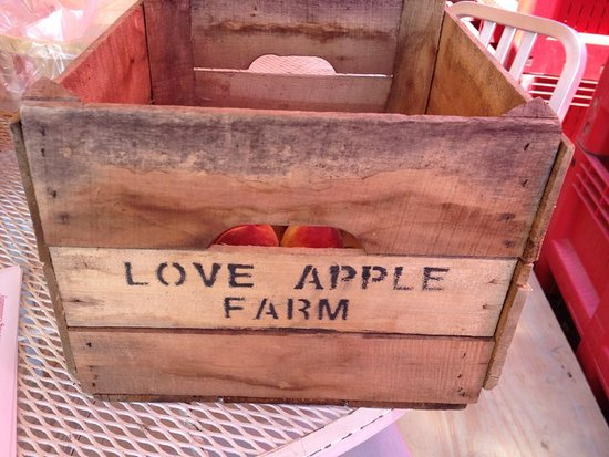 ‪‪Ghent‬, نيويورك: Love Apple Farm UPick Apples‬