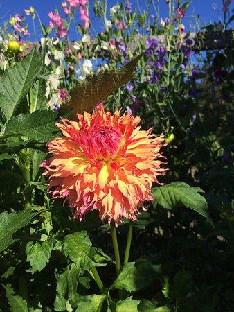 Georgeson Botanical Garden : photo3.jpg