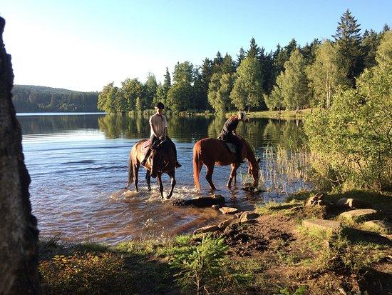 Telc, Tjekkiet: kratka pauza na obcerstenie koni pri jazere