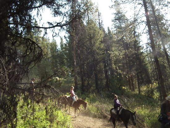 Swift Creek Outfitters & Teton Horseback Adventures