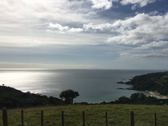 Waiheke Island, New Zealand: the view from the car