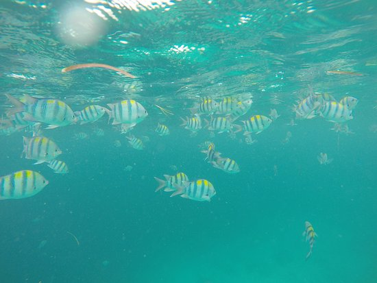Just a few of the amazing fish we saw