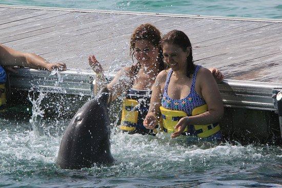 Dolphin Island : IMG_0057_large.jpg