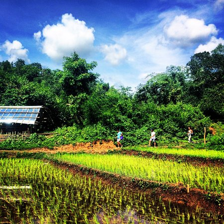 Lashio, พม่า: Rice Paddy Trekking