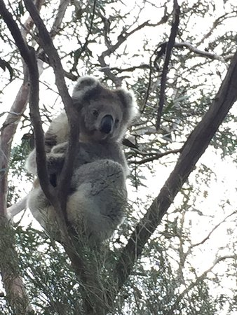 Kangaroo Island Wildlife Park: photo2.jpg