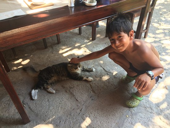 Assos Alarga, Bed and Breakfast: Hotel's lovely cat with our son