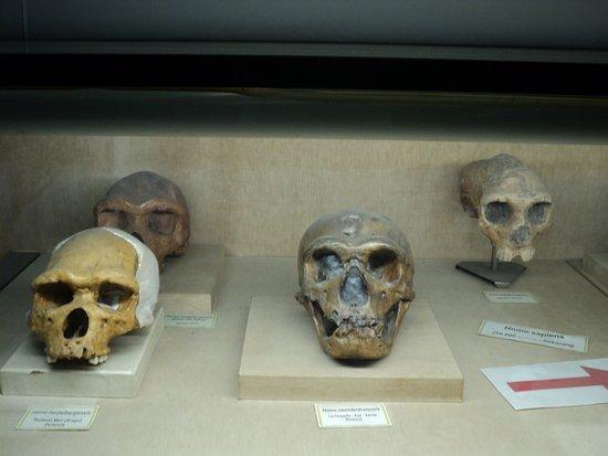 610 Koleksi Gambar Fosil Hewan Purba Dan Penjelasannya Gratis Terbaik