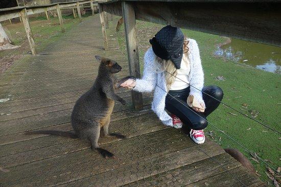 Cowes, Australia: Hello There MR