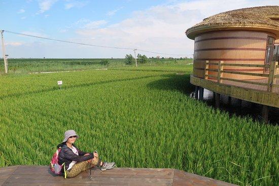 Dawa County, China: Paddy Fields