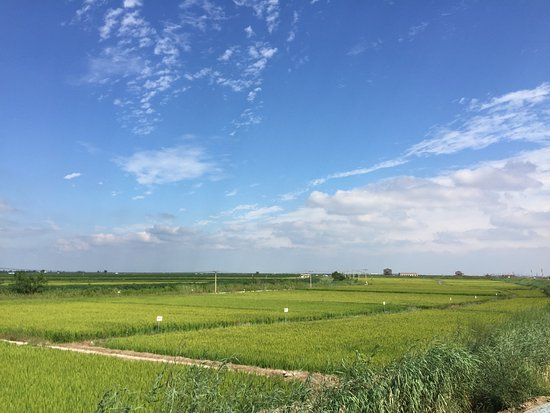 Dawa County, China: green green grass
