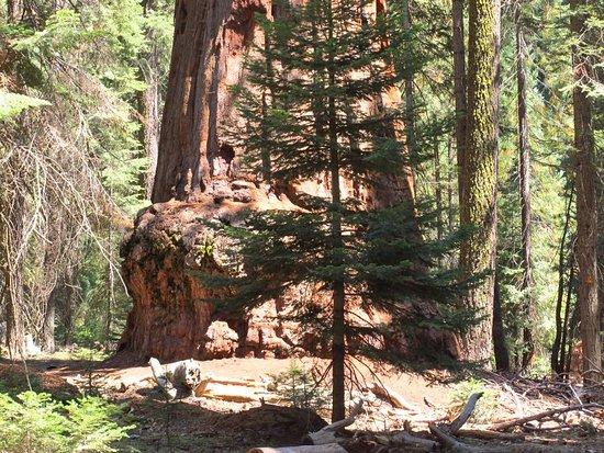 ทรีริเวอร์ส, แคลิฟอร์เนีย: Sequoia and Kings Canyon National Parks