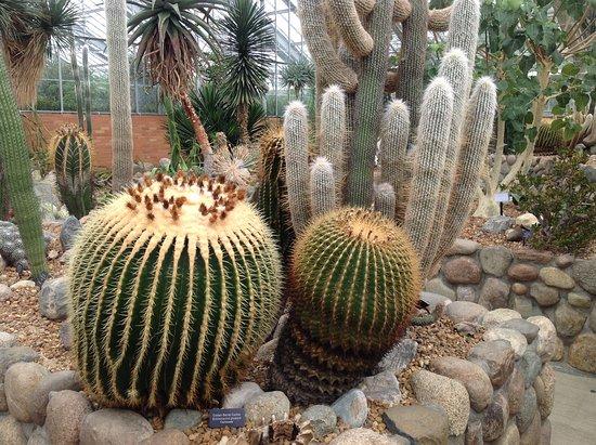 Matthaei Botanical Gardens: Cacti
