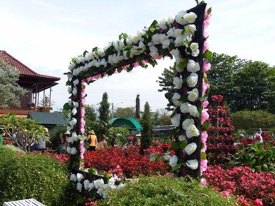 Kebun Bunga Begonia Lembang Picture Of Begonia Garden Lembang Tripadvisor