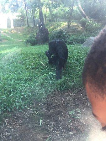 North Carolina Zoo: photo0.jpg