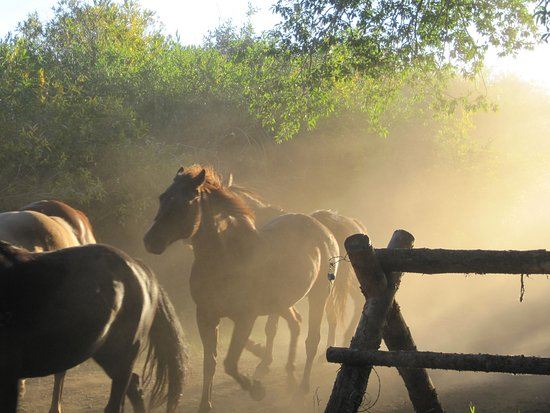 Vee Bar Guest Ranch: Horses coming in from the pasture in the early morning!