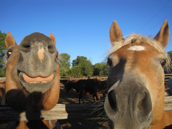 Vee Bar Guest Ranch: New, soft-nosed friends!