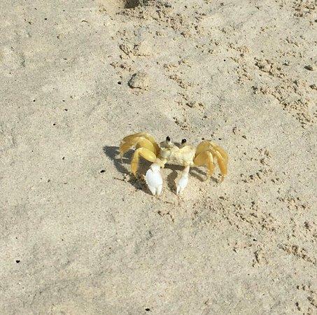 Sebastian's on the Beach: IMG_2147-1_large.jpg