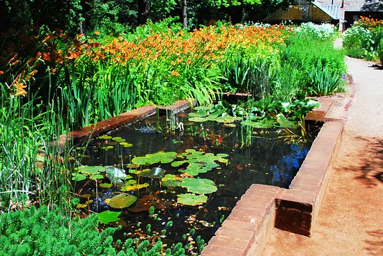 Grass Valley, CA: Lily Pond in the Rose Garden