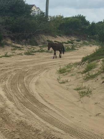 Corolla Wild Horse Tours: photo0.jpg