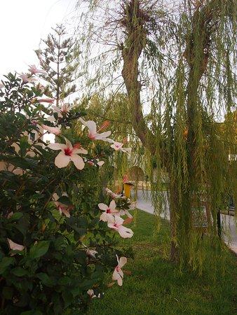 Grecotel Royal Park: the gardens