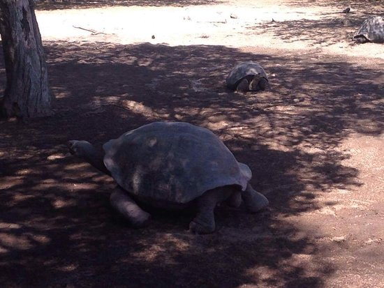 Puerto Villamil, Ecuador: Tortugas Galapagos