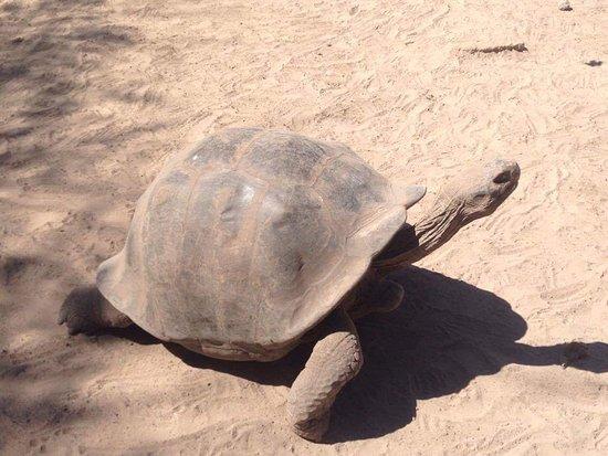 Puerto Villamil, เอกวาดอร์: Bella tortuga