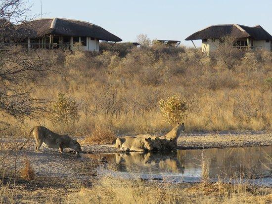 Amazing wildlife around the camp