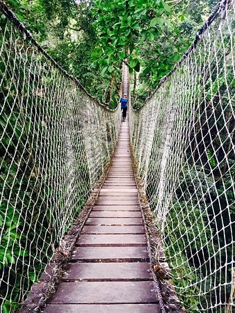 Inkatraces Day Tours: Tree canopy walk (excursion at the Inkaterra Reserva Amazonica)