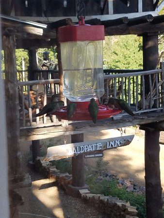 The Baldpate Inn: View from our breakfast window - LOTS of hummingbirds