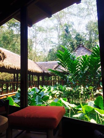 Inkaterra Reserva Amazonica: View from the central dining/lounge