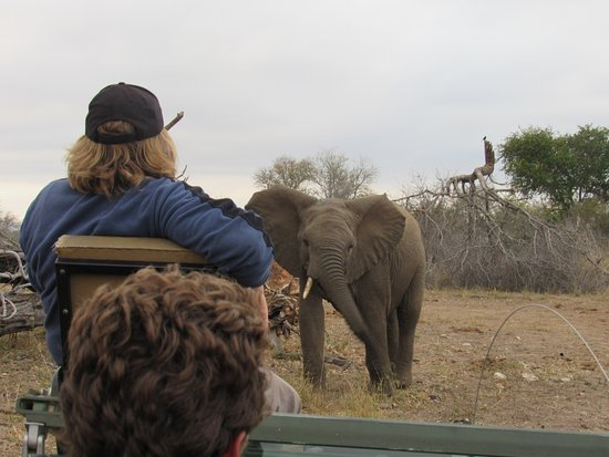 Gravelotte, Sydafrika: Close encounters of the Elephant kind!
