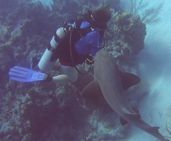 Glovers Reef Atoll, Belize: Shark Bump