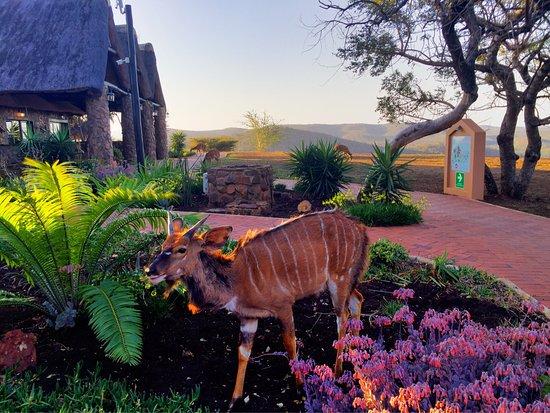 Zulu Nyala Game Lodge: photo7.jpg