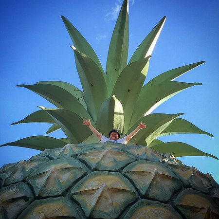 Big Pineapple: photo0.jpg