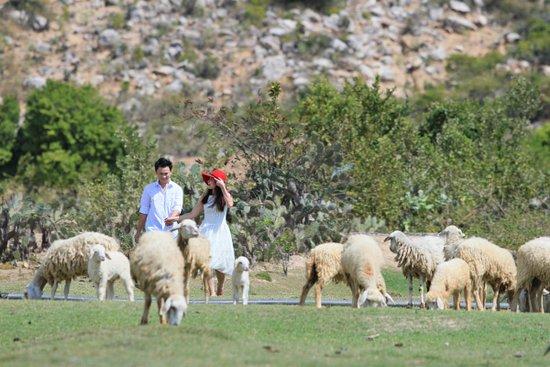 Phan Rang-Thap Cham, Vietnam: sheep